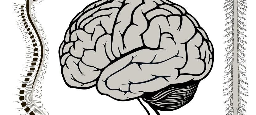 Terapia craniossacral mobiliza fluidos efáscia