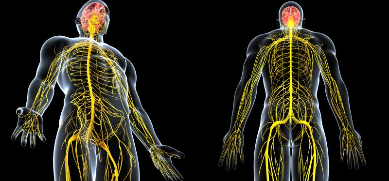Conexão cérebro-espinhal une cognição, estrutura emobilidade