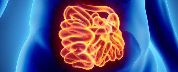 226-second-brain-enteric-nervous-system-colon_600
