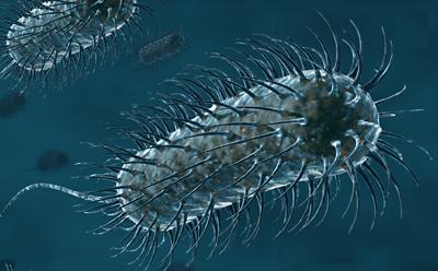 As células, como as bactérias, são mais hi-tech que sistemasdigitais