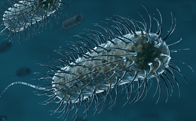 bacteria_ufhealth