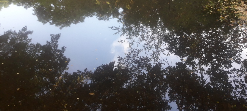 Contemplação como conexão do corpo com o ambiente e a sustentabilidade