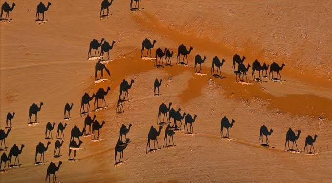 De camelos, humanos e educaçãotransformadora
